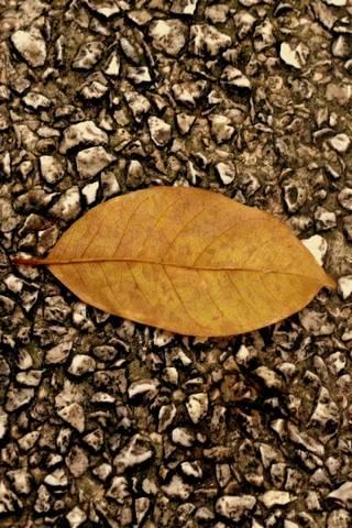 Düşen yaprak