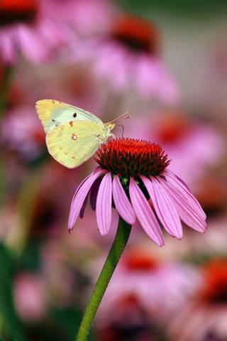 나비 그리고
